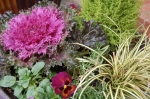 Mixed container including ornamental kale and pansy 'Dynamite Wine Flash'