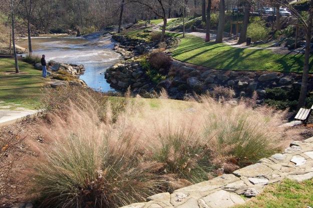 Muhlenbergia capillaris (muhly grass)
