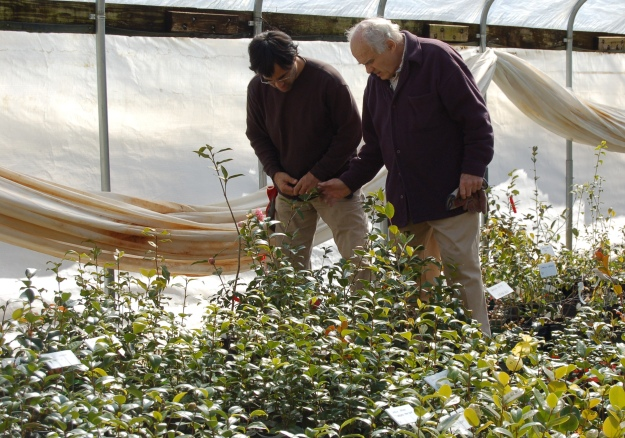 "Camellia Forest Nursery is considered a ""gem"" by gardeners and industry experts alike."