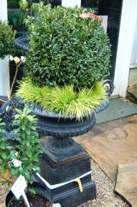 Boxwood with feather boa