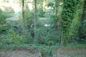 Back garden and woodland adjacent to river, before clean-up began.