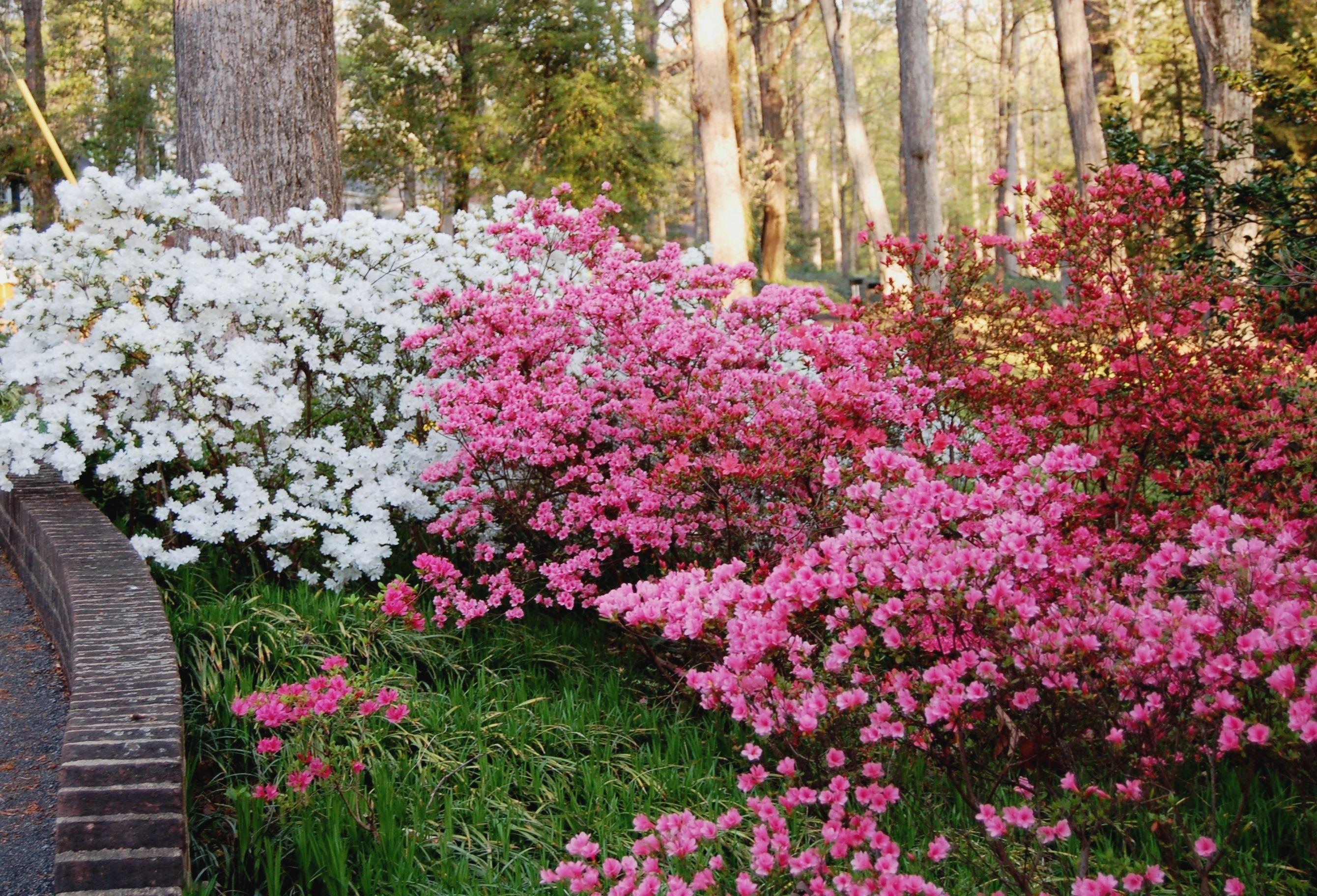 Garden Blogger S Bloom Day April 2013 Hortitopia