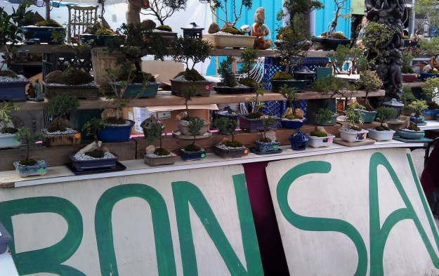 Mount Holly Bonsai--visit the nursery or catch Klaus at a show.