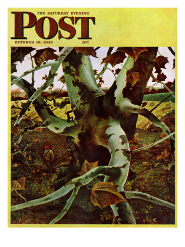Magazine cover by Andrew Wyeth, one of many paintings featuring the American sycamore.