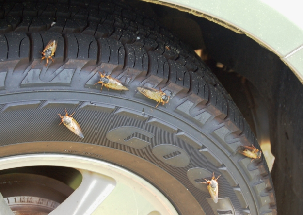And even trying to dry their wings with reflective heat of a car tire.