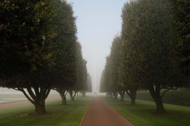 Truncated trees represent lives cut short. (2011)