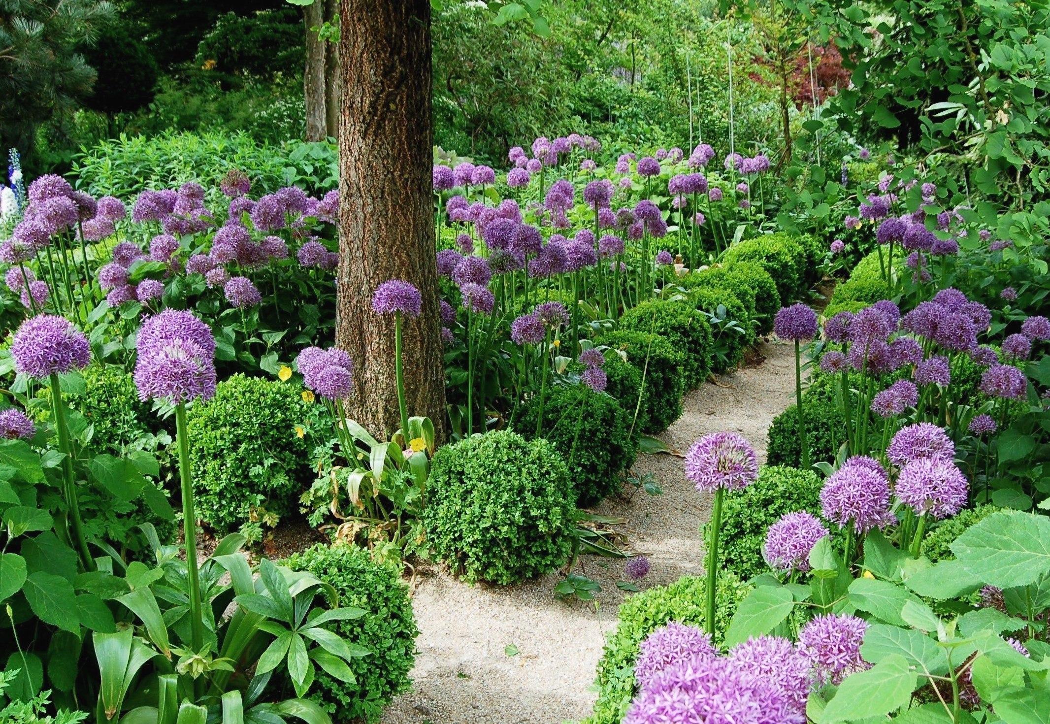 Agapanthe—un jardin spectacle
