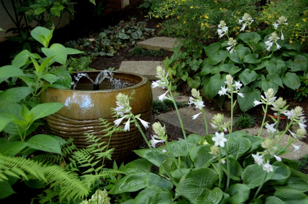 Current garden, July 2013--The white flowers of hosta scent the secret garden with their perfume.