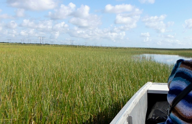 Keep hands in the boat or you'll find out how sawgrass got its name!