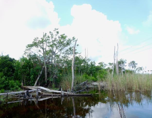 Tree islands provide habitat for birds and many small mammals.