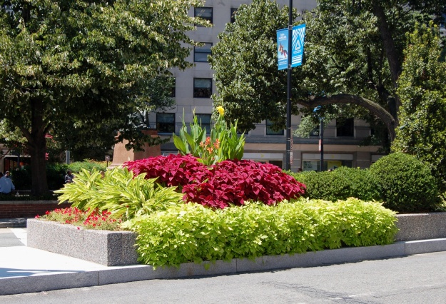Floriferous median on nearby Connecticut Avenue.