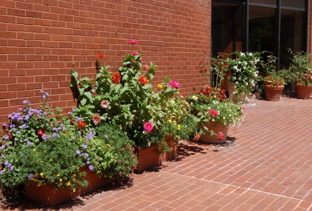 The YMCA on Rhode Island breaks up the brick with a multi-container garden.