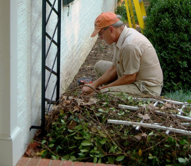 The first trellis to go up replaces a plastic model that provided support to a Confederate jasmine.