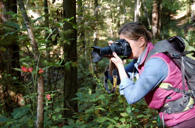 Lezlie capturing the autumn display of hearts-a-bustin (Euonymus americanus).