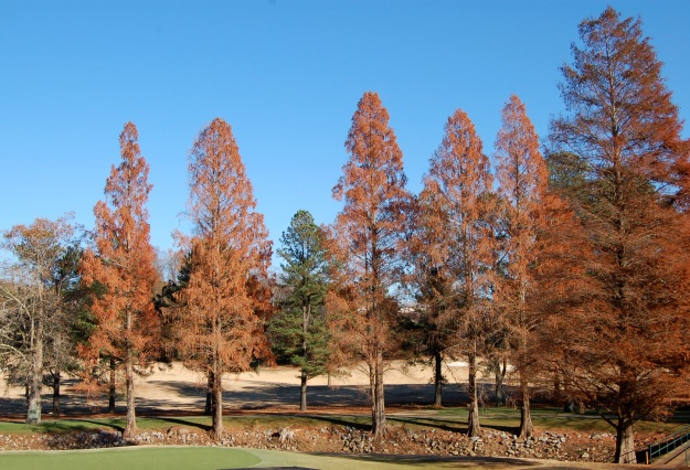Two types of deciduous conifers.