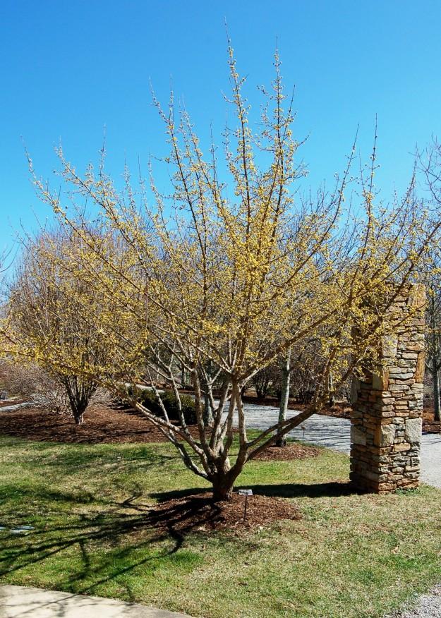 North Carolina Arboretum, Asheville