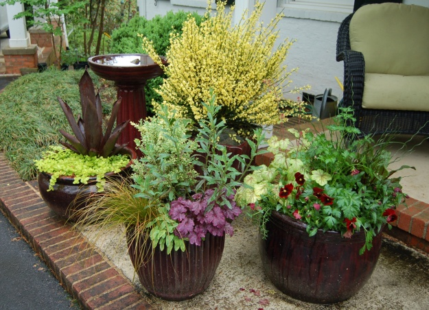 Container gardens on front stoop.