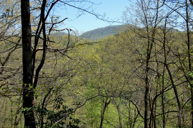 Trail view of Eastatoe Creek Heritage Preserve