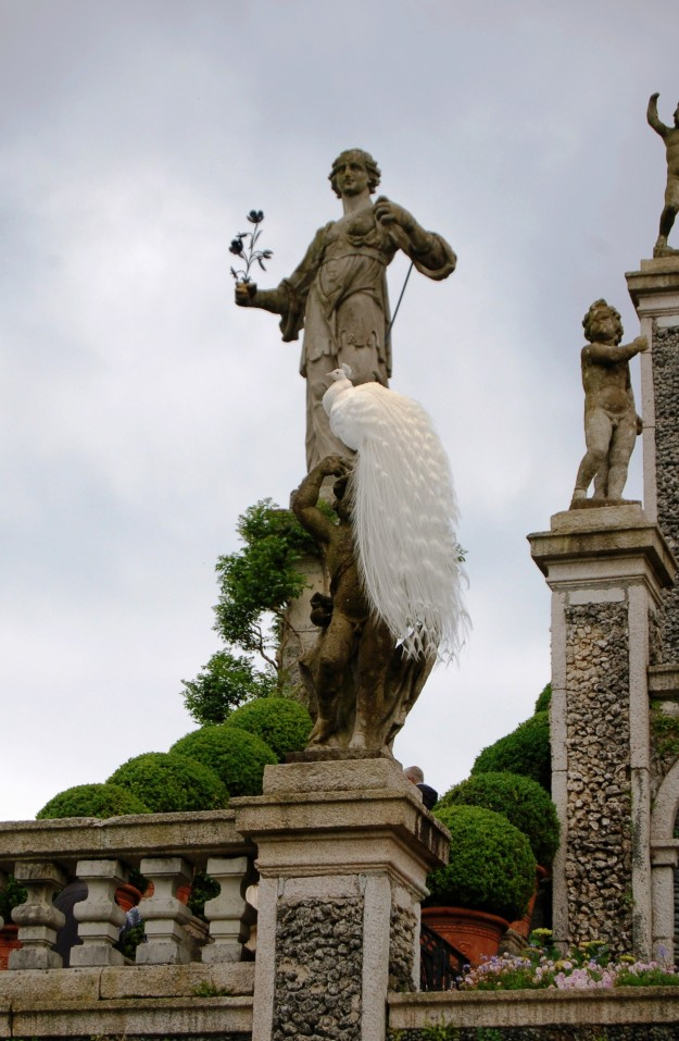 White peacock at Isola Bella on Lake Maggiore.