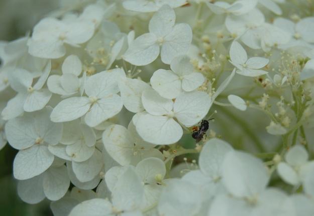 Tiny wasp on 'Incrediball'