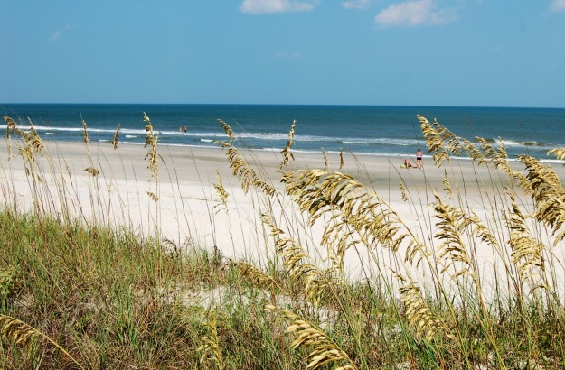 Nothing tops a SC beach trip, unless of course, it's beach plus plants!