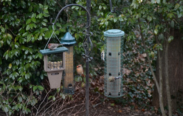 Left to right:  male House Finch, female Northern Cardinal, and two female Goldfinches.