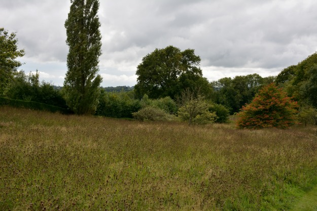 The grass and meadow of the Orchard from the Long Border.