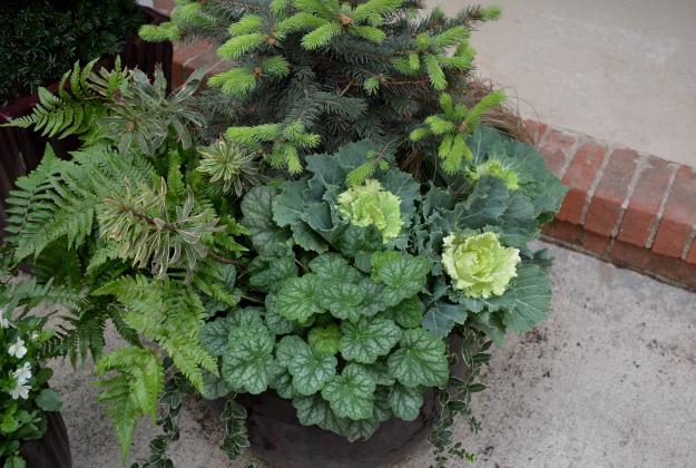 Autumn fern, variegated creeping myrtle, Ascot Rainbow euphorbia, Colorado blue spruce, Peppermint heuchera, Toffee Twist carex, plus ornamental kale